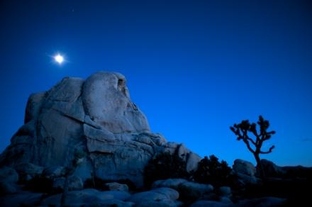 Joshua Tree Beneath the Rising Moon