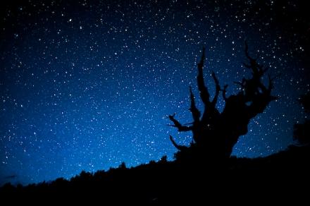 Bristlecone beneath Sierra Skies