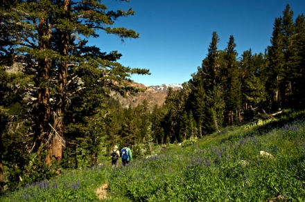 Erik and Abby passing through fields of lupine.