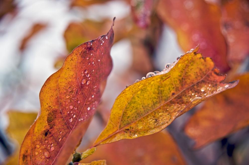 Fall in the Blue Ridge Mountains (4/6)