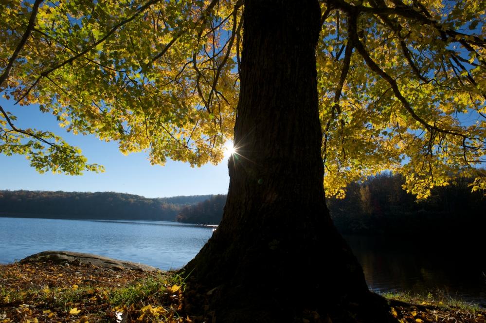Fall in the Blue Ridge Mountains (3/6)