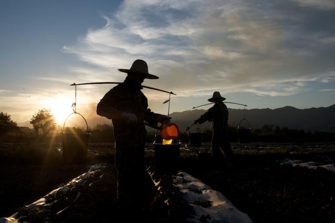 Farm workers spreading fertilizer near Luang Nam Ta