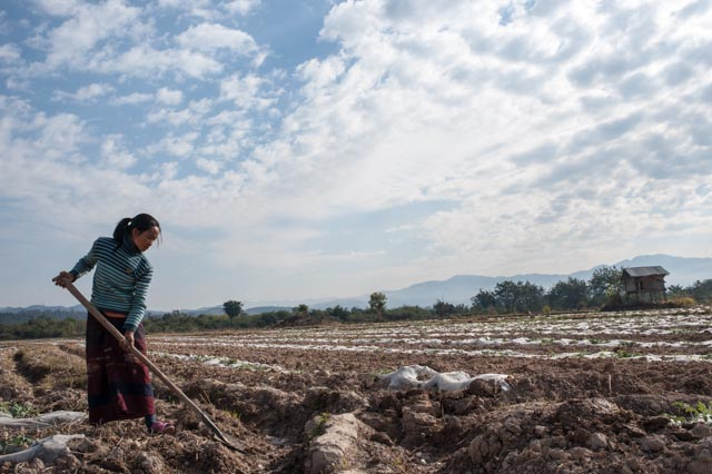 A young woman works the fields