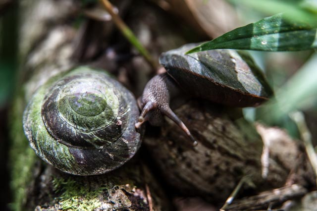 Snails, Yunque Rain Forest