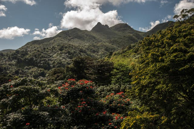 The Yunque Rain Forest
