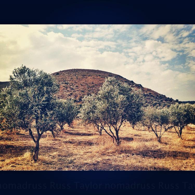Olive Groves, Tiberias