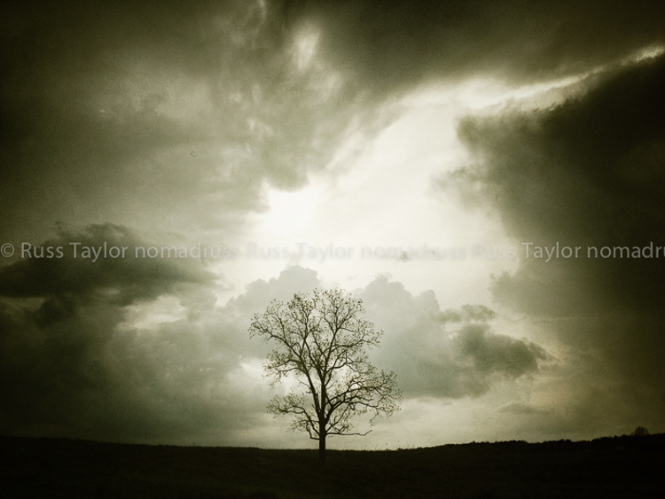 Winter Tree, Mentone, Alabama
