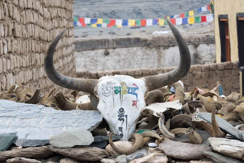 A yak skull with the phrase Om Mani Padme Hum and rams horns adorn a wall.