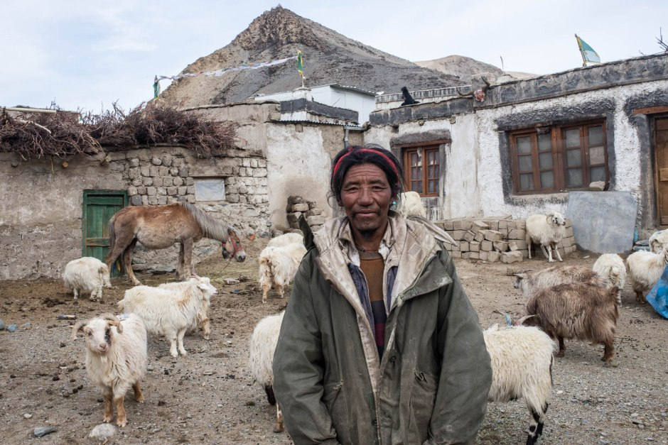 A Tibetan man prepares to take his herd out to pasture  at dawn.