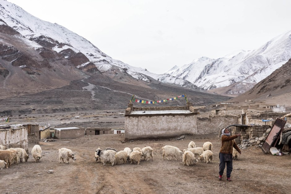 A Tibetan woman throws a stone at a neighbors goats in order to keep the herds separated.