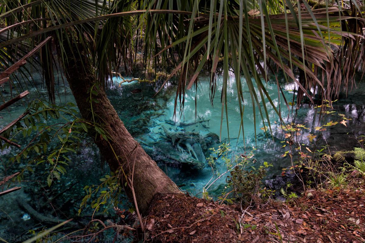fern hammock springs florida springs   nomadruss in words and photos  rh   nomadruss me